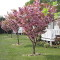 Photo of blossom on trees at the Orchard Caravan Park